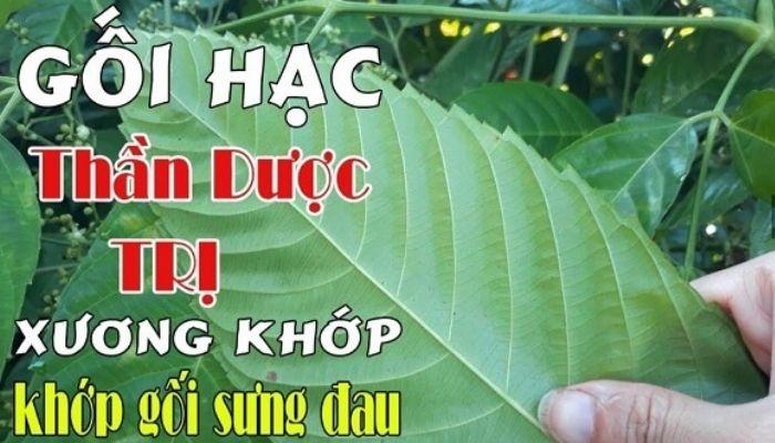 goi-hac-than-duoc-tri-xuong-khop-khop-goi-sung