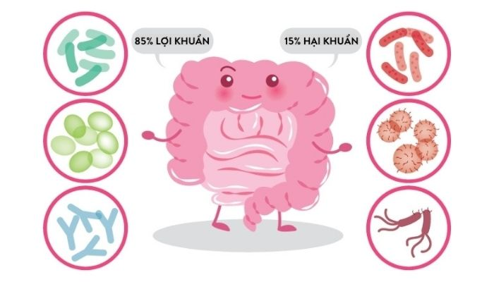 sau-khi-thai-doc-ca-phe-loi-khuan-co-moi-truong-thuan-loi-phat-trien-voi-85%-loi-khuan-15%-hai-khuan